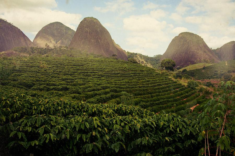 Производство кофе в Бразилии: плантация