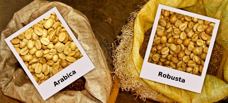 Как вид кофейного дерева влияет на вкус